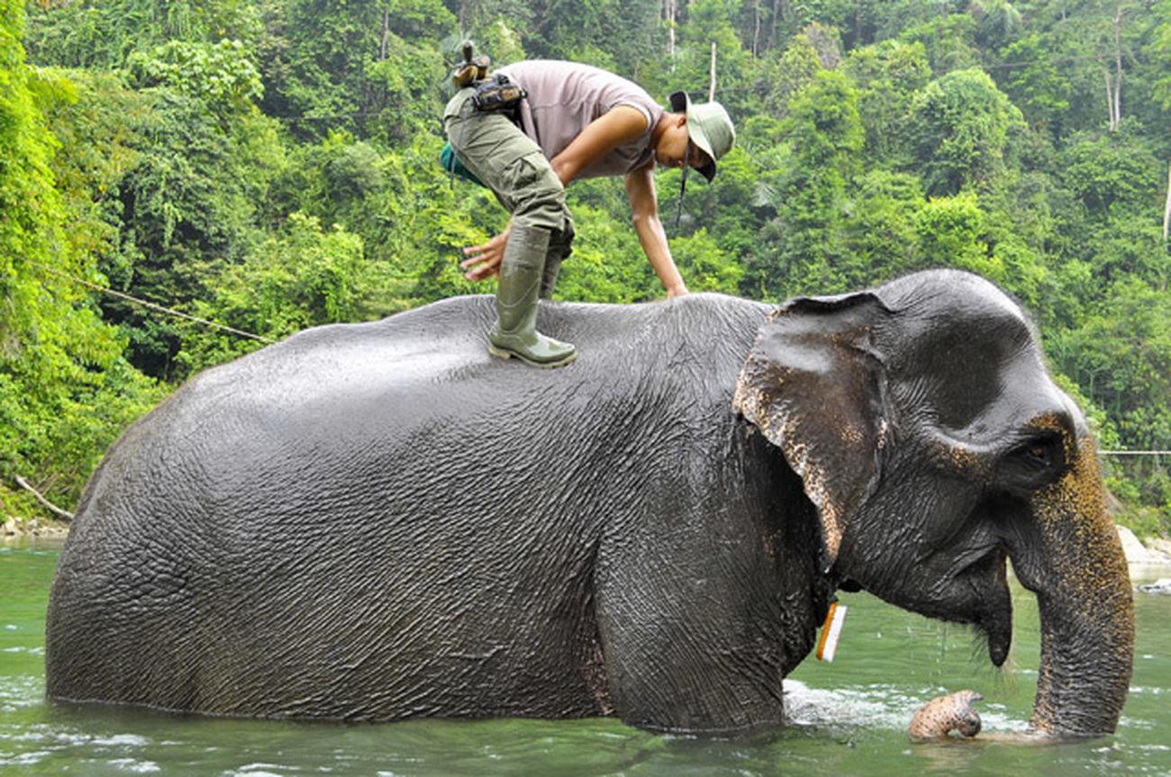 The Storyteller - 2014 Eyeem Awards Nature - Elephant Tangkahan - Indonesia Wildlifeconservation