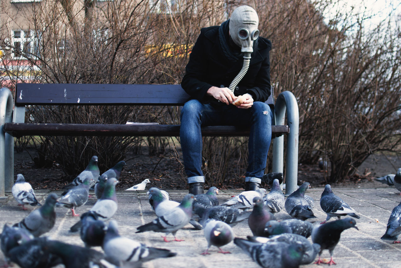 Bench Birds Clean Air Discover Your City Editorial  Environment Feeding Birds Gas Mask Journalism Light And Shadow Outdoors Pollution Pollution In My World The Week Of Eyeem