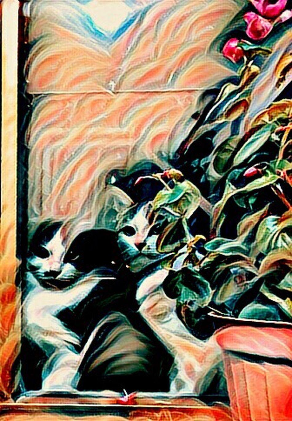 Multi Colored No People Low Angle View Indoors  Close-up Day Eyeemphoto Architecture EyeEm Best Shots EyeEm Gallery Relaxing Domestic Animals Catsofinstagram Cats Cat Pupsofinstagram Pups Puppy EyeEm Best Edits Hello World Kurtdere SARAY TEKİRDAĞ