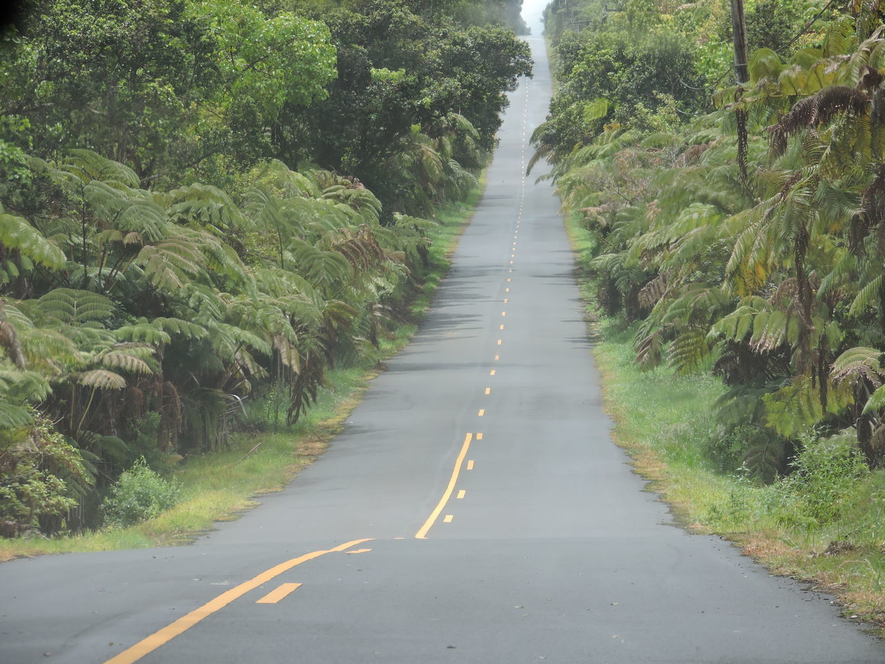 Day Nature No People Outdoors Plant Road The Way Forward Transportation Tree White Line