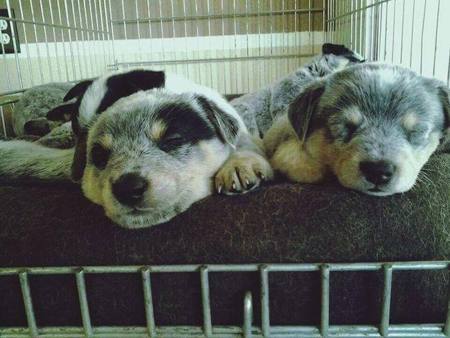 Summer Awww Summer Dogs Enjoying Life Puppy Healer