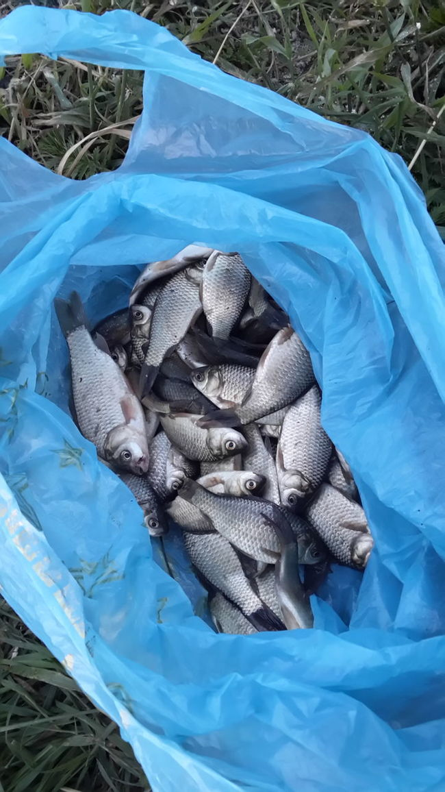 Улов Fishing Check This Out Fishes Fish Fishing Time караси Рыбалка улов