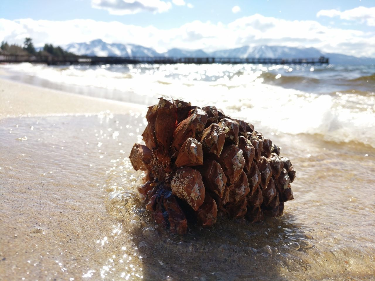 Beach Nature Pine Cone Macro Waves Wave Sand Tide Lake Mountains And Beach Beauty In Nature Close-up Day Outdoors Water Cloud - Sky Sierra Nevada Mountains Travel Tranquillity California