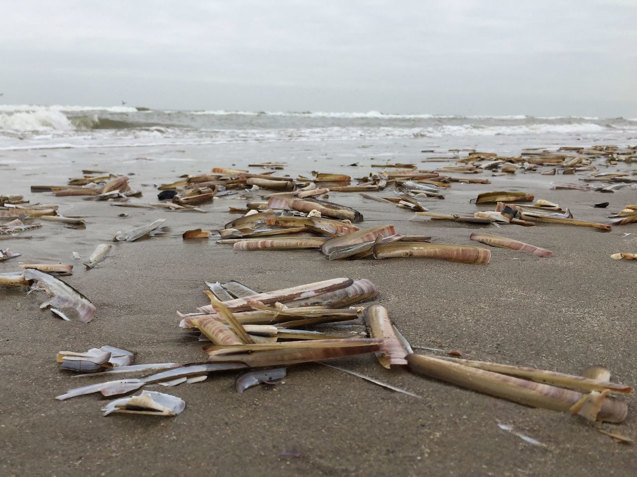 Beach Razor Clams Wijk Aan Zee Strand Netherlands Low Angle View