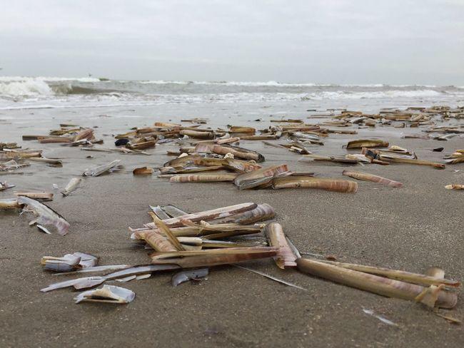 Beach Razor Clams Wijk Aan Zee Strand Netherlands Low Angle View