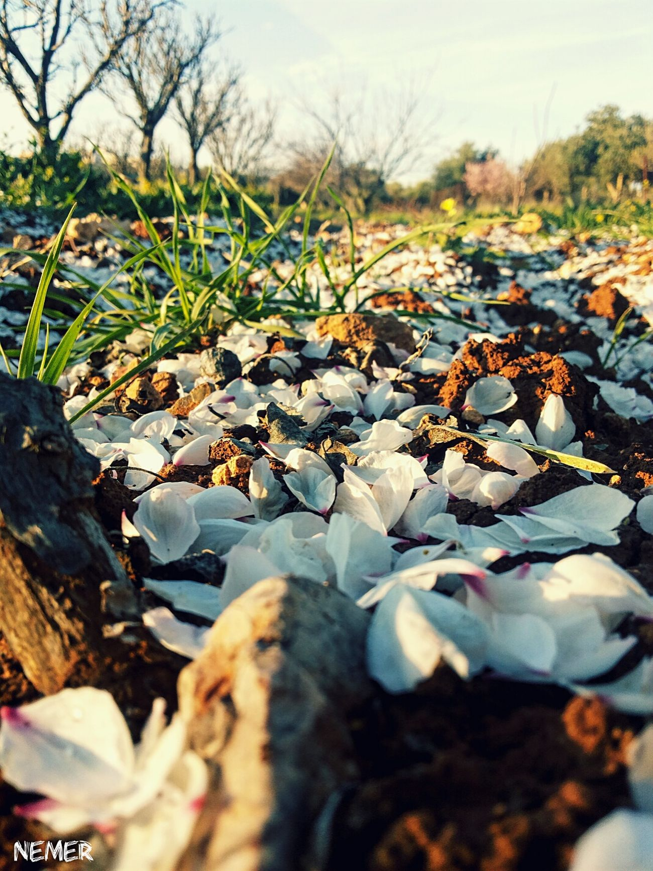 Falling Nature White Flower Flower Paper White Landscape First Eyeem Photo