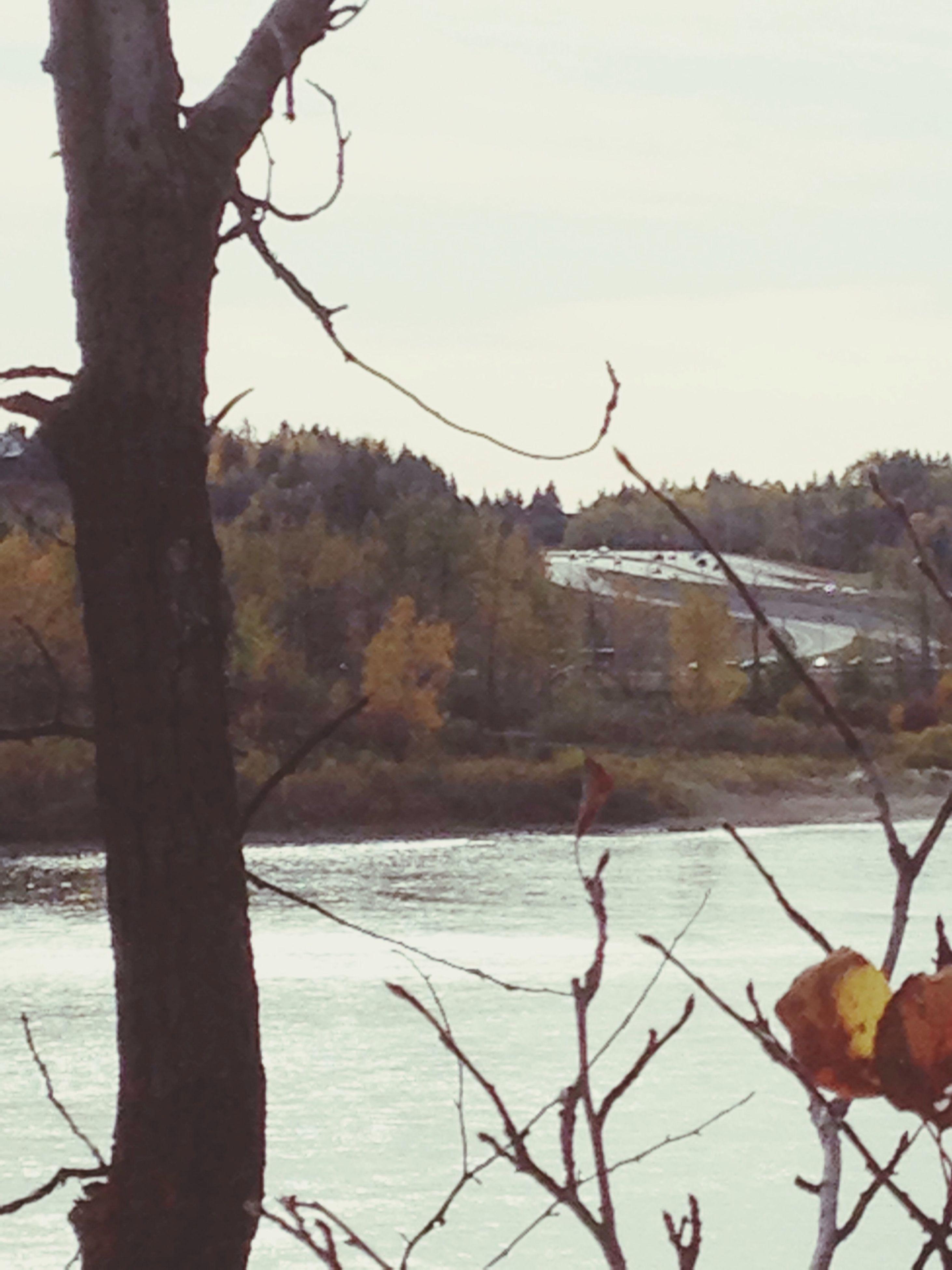 winter, bare tree, water, branch, cold temperature, snow, tranquility, tree, lake, tranquil scene, nature, scenics, season, beauty in nature, river, sky, weather, landscape, frozen, non-urban scene