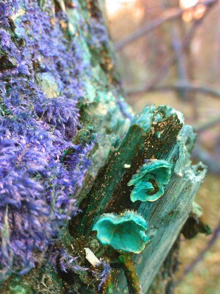 Fungi Fungus Addict Edited Eye Em Nature Lover