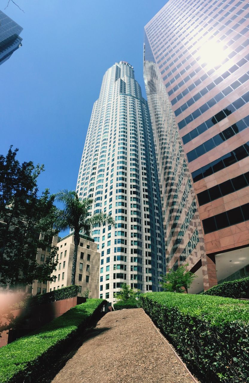 architecture, building exterior, built structure, skyscraper, modern, growth, city, day, tree, sunlight, tall, outdoors, sky, clear sky, low angle view, no people, grass, office park
