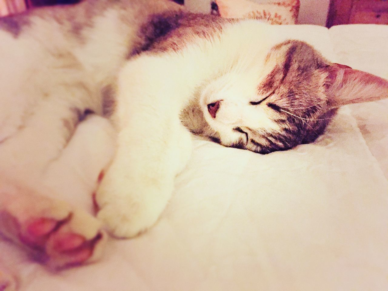 domestic cat, sleeping, pets, domestic animals, one animal, animal themes, mammal, feline, cat, resting, indoors, eyes closed, relaxation, lying down, no people, bed, close-up, nature, day