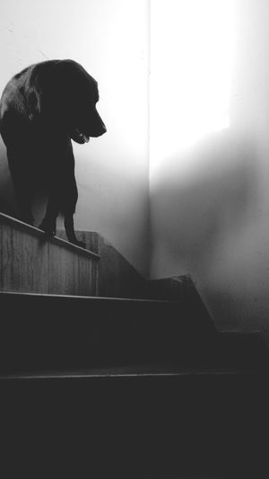 Your shadow is nothing but you in the parallel universe One Animal Animal Themes Domestic Animals Pets Dog Staircase Feline Day No People Animal Shadow Black And White Innocence Railing Pet Lover Black And White Photography Deep Quote Own Style  Life Thoughts Out Of The Box The Street Photographer - 2017 EyeEm Awards Live For The Story The Great Outdoors - 2017 EyeEm Awards