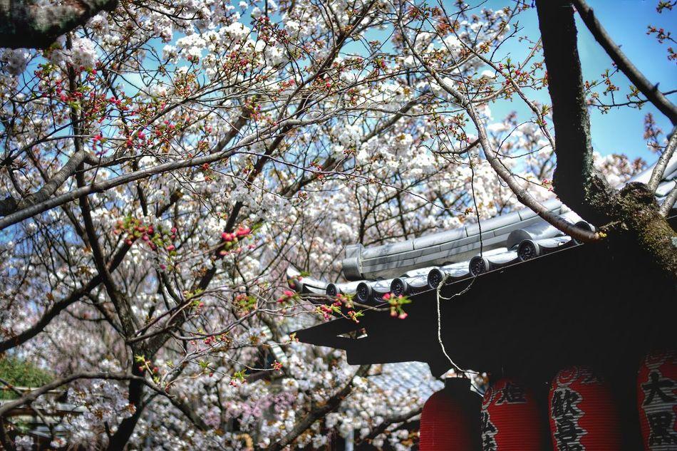 2016 EyeEm Awards Spring Flowers Spring EyeEm Gallery EyeEm Best Shots Japan Kyoto,japan Kyoto EyeEm Japanese Shrine Nature Photography Nature & Human Creation! Nature & Architecture Architecture Ultimate Japan