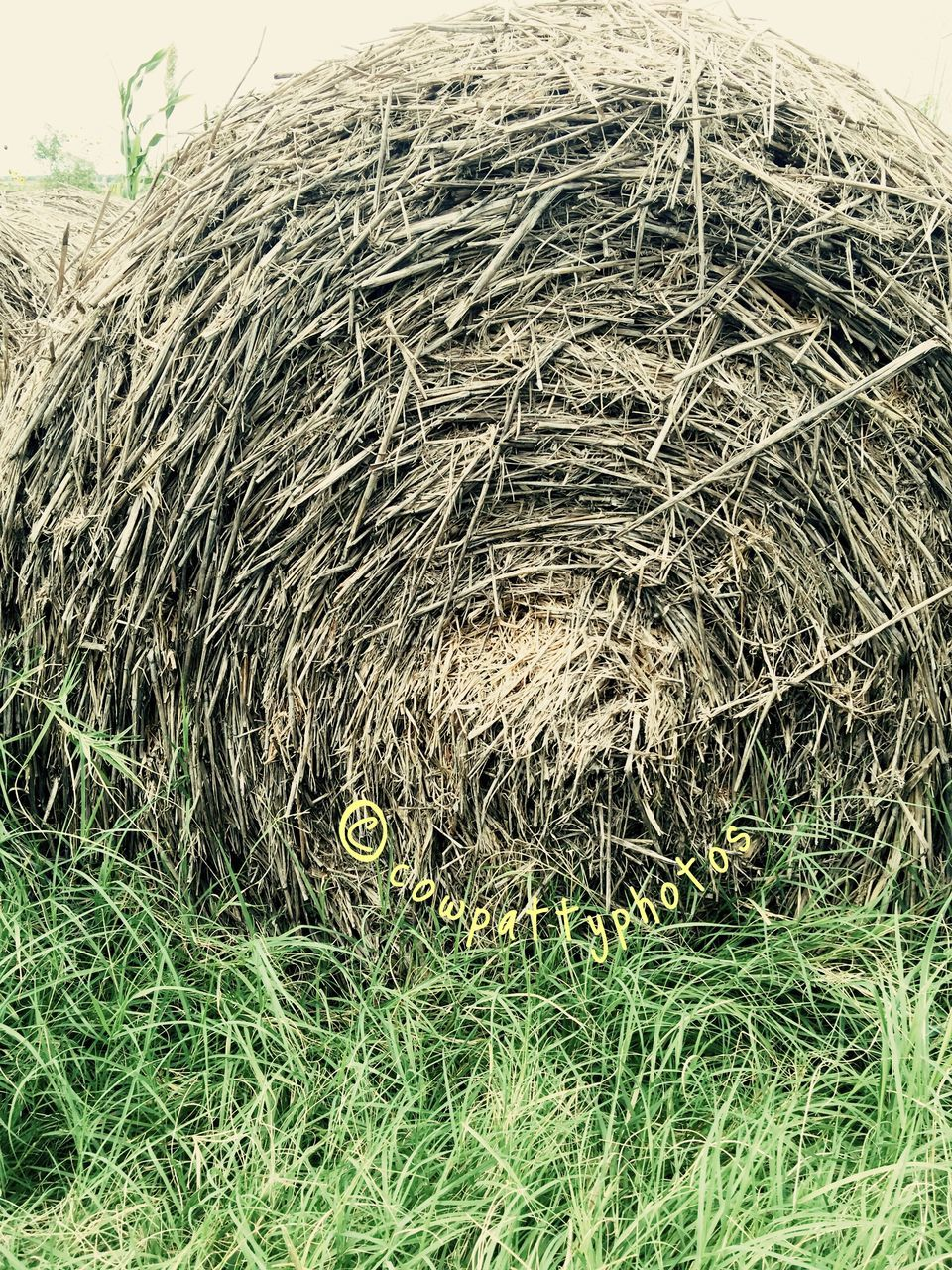 hay, no people, hay bale, outdoors, bale, day, agriculture, stack, grass, nature, close-up, mammal