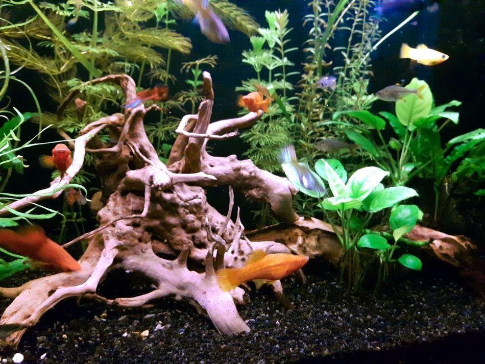 Beautiful stock photos of weed, Animal Themes, Animals In Captivity, Aquatic, Fish