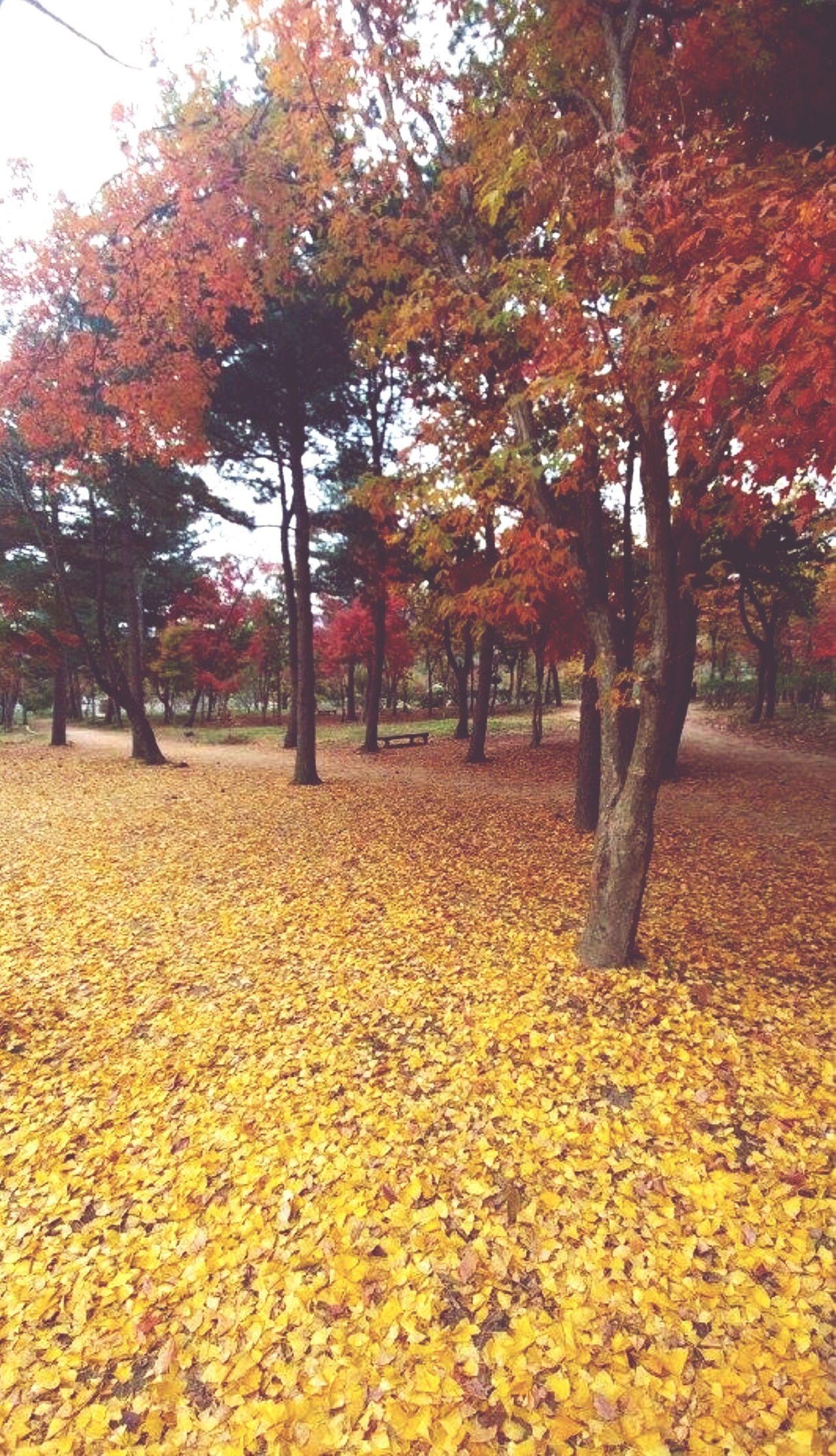 Auntumn Seoul South Korea