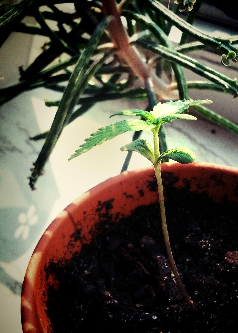 Growing Plants Watching Plants Grow Grow Slow