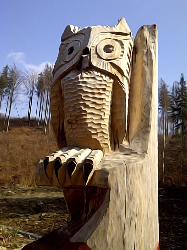 Owl Close-up Outdoors Zoology Animal Head  Creativity Bird Owls Owl Eyes Nature Snapshoot Fauna Creature Sculpture Forest Trees Wild Wildlife