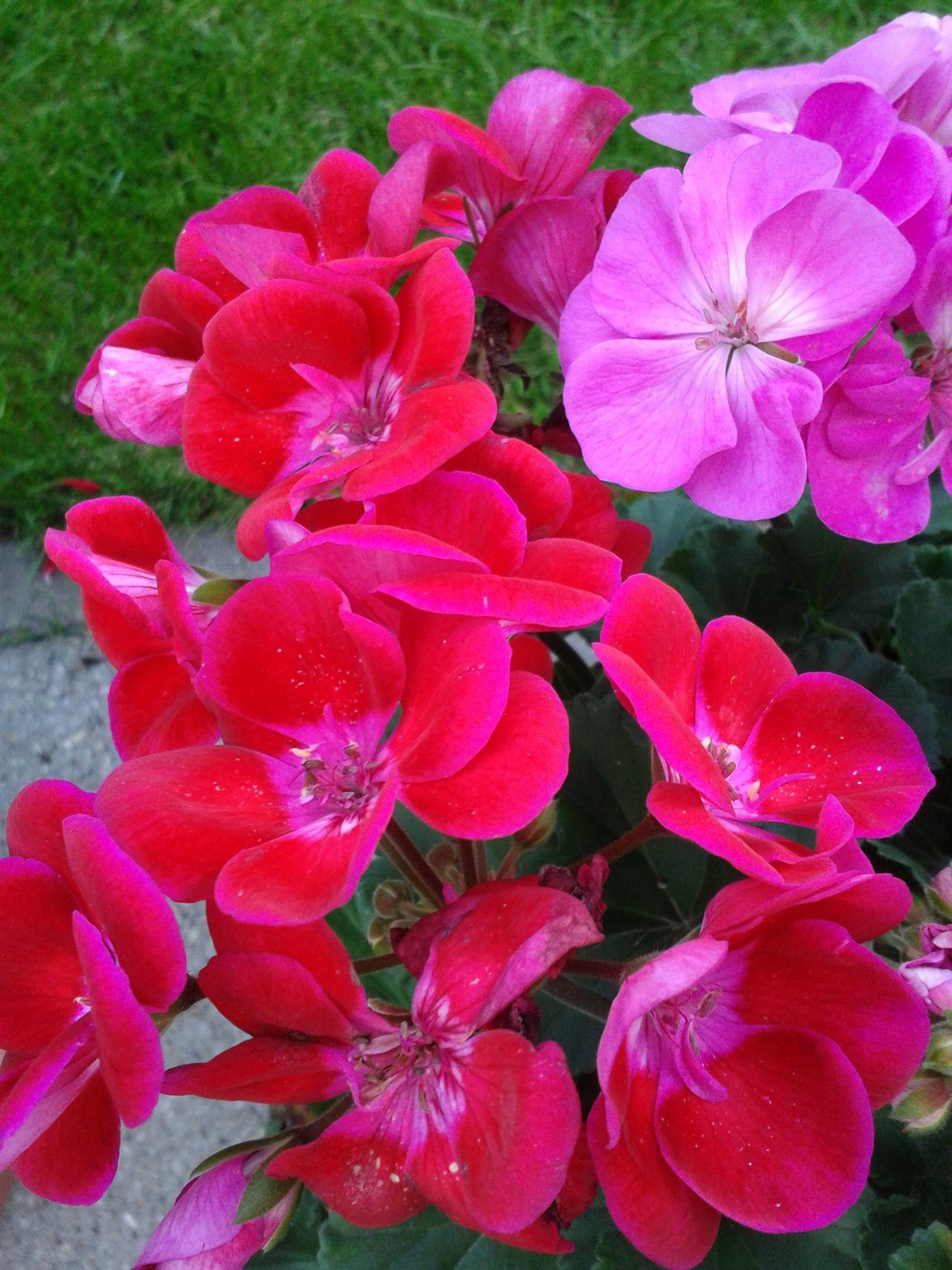 Relaxing Beautiful Flower Beautiful Nature Flowers