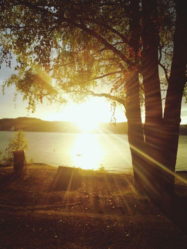 Sunset Tree Sea And Sky Fjord