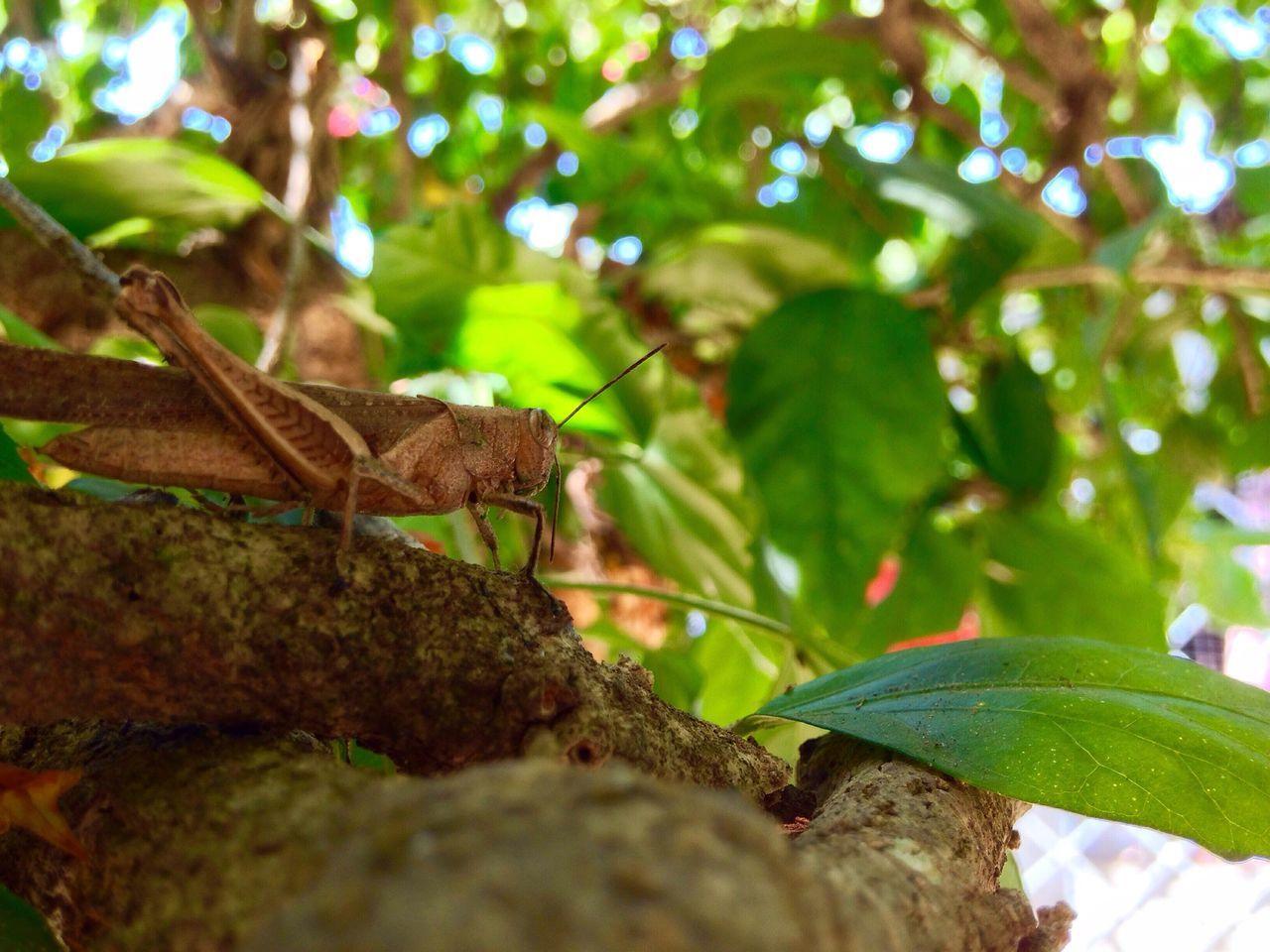 """""""Como muere el festival de baile, el sonido del viento en los pinos y las voces de los insectos"""" Mobilephotography Insect Nature Selva Gussfilms"""