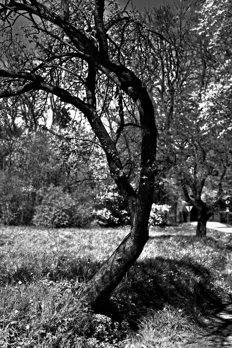 Beauty In Nature Blackandwhite Branch Day Growth Huge Nature No People Outdoors Sky Tranquil Scene Tranquility Tree Tree Trunk