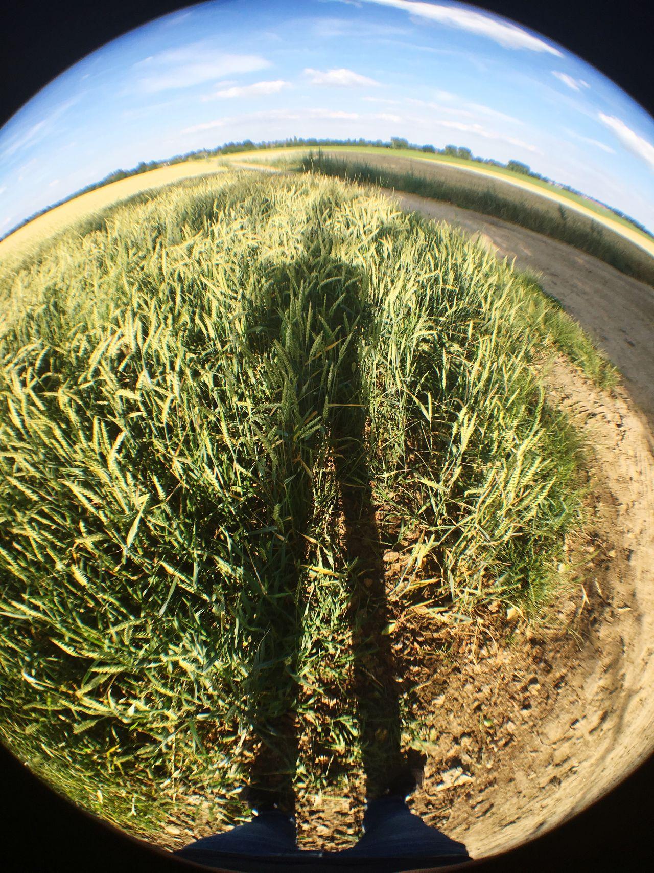 Fisheye Shadow Grain Field Sunny Blue Sky