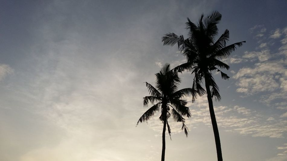 2 Coconut trees against a dramatic evening sky Atmosphere Coastline Coconut Tree Majestic Outdoors Palm Tree Scenics Silhouette Sun Sunset Tranquility Tropical Climate Vacations