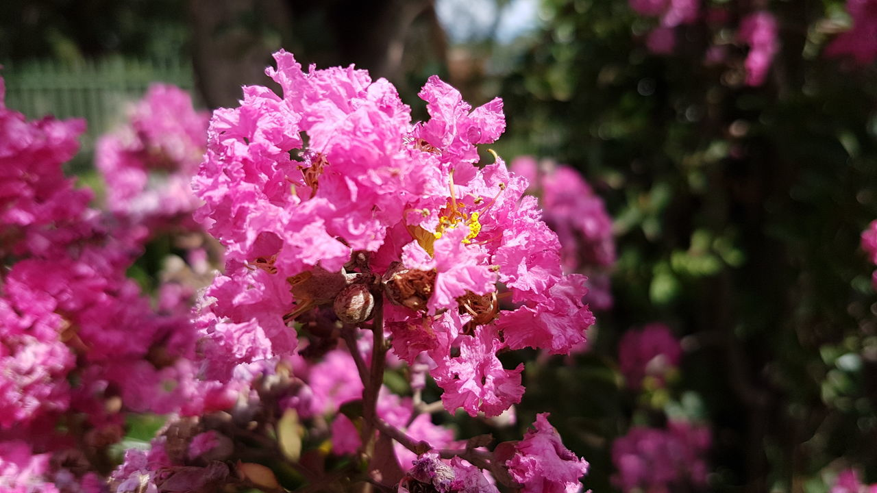 Flower Nature Freshness Fragility Pink Color Beauty In Nature Focus On Foreground Close-up Petal Outdoors No People Day Growth Plant Flower Head Rhododendron South Africa 🇿🇦 South Africa Beauty In Nature God's Glory On Display  Environmental Conservation