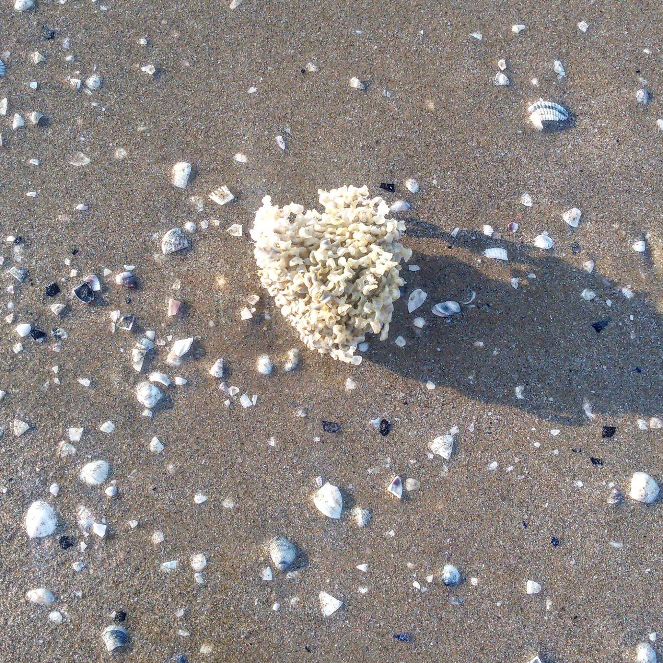 Spugna Mare ❤ Photography Illuminated Enjoyment Likes4likes Riminibeach👍😎 Colorful Sand Shell Sun Beach Life Focus Color Explosion Life Is A Beach Following First Eyeem Photo Sunnydays Sunset Water