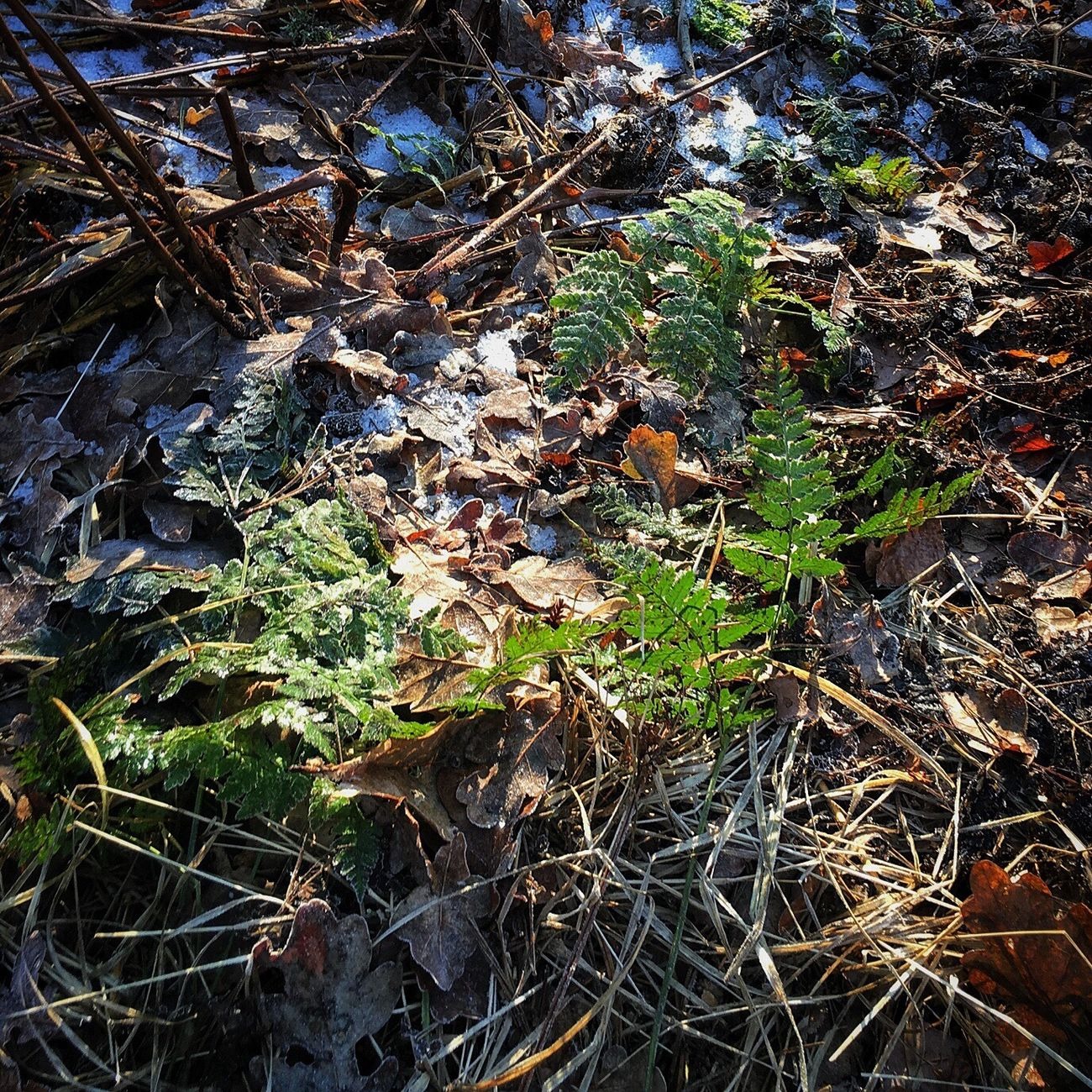 Nature Growth No People Outdoors Beauty In Nature Close-up Day Fragility Freshness Beauty In Nature Cold Temperature Winter Nature Forest Sun