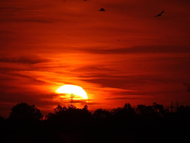 Sunset Silhouettes Sunset Birds Silhouette Shadows On The Sun Red Sky Orange Sky Clouds Sunset Colour Of Life Sunset_collection Colors And Patterns