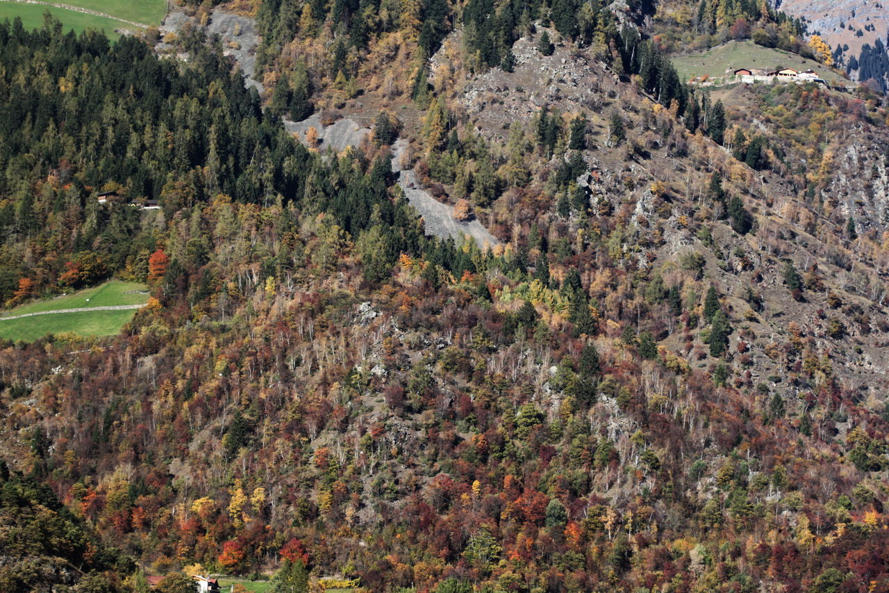 Autumn 2016 Brown Color Day Fields From Above  Italy Landscape Nature No People Outdoors Rabland,sudtirol Scenics Südtirol Trees And Bushes