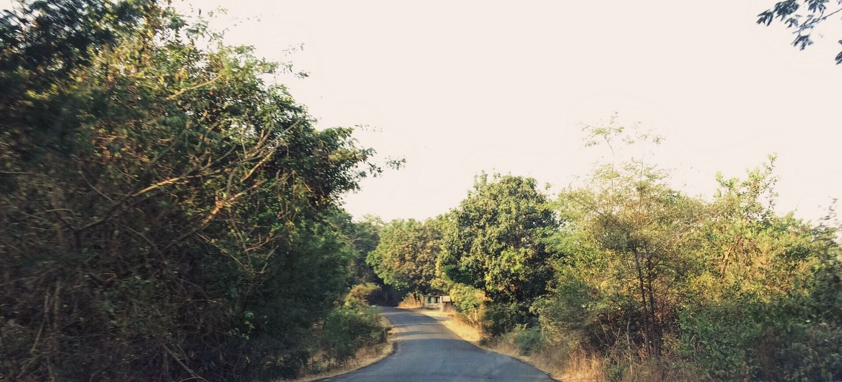 Tree The Way Forward Road Nature Lush Foliage Growth Scenics Tranquility Outdoors Day Beauty In Nature Clear Sky No People Sky EyeEm Best Shots - Nature EyeEm Best Shots EyeEm Best Edits