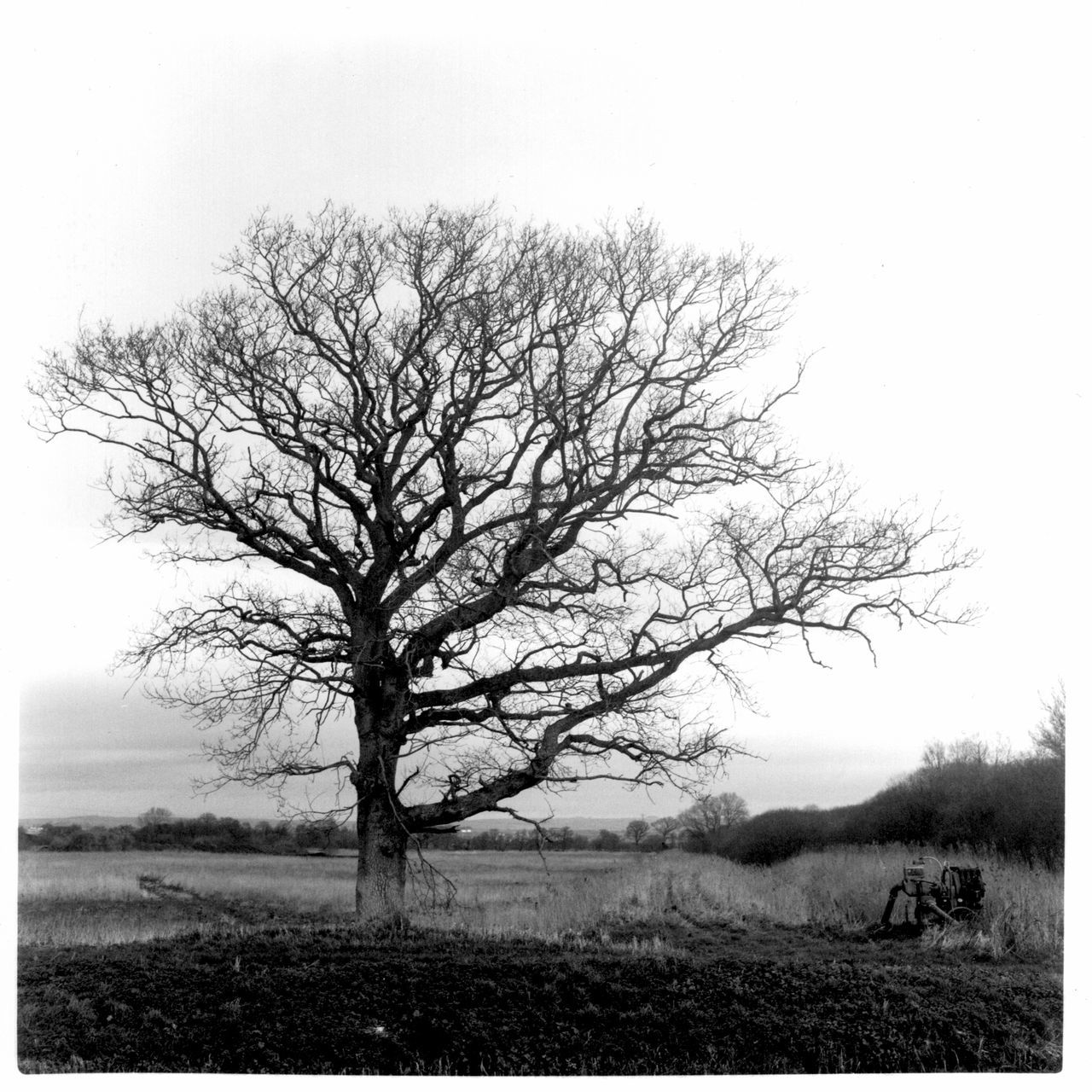 Analogue Bare Tree Beauty In Nature Blackandwhite Bristol Folk House Darkroom Chemistry Darkroom Film Photography Isolated Landscape Monochrome Nature No People Oak Outdoors Retro Rolleicord Single Tree Sky Somerset Somerset Levels Uk TLR Camera Tranquil Scene Tranquility Tree