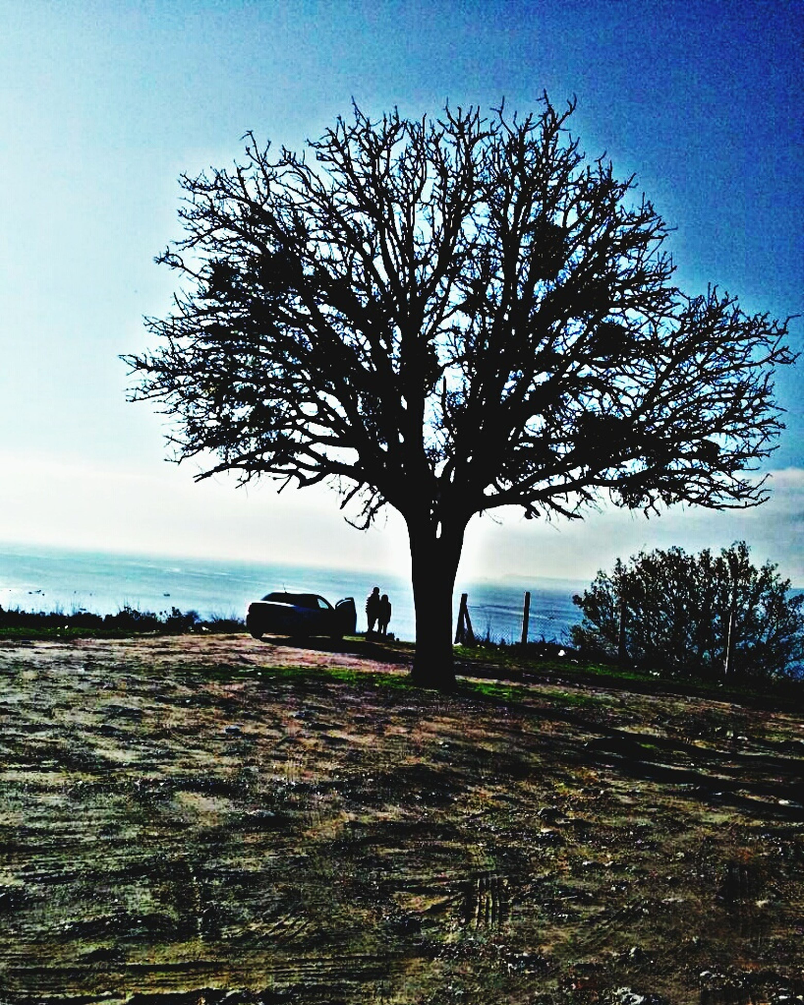 bare tree, tree, sky, tranquility, branch, landscape, tranquil scene, field, nature, scenics, silhouette, beauty in nature, clear sky, tree trunk, sunlight, non-urban scene, horizon over land, single tree, outdoors, growth