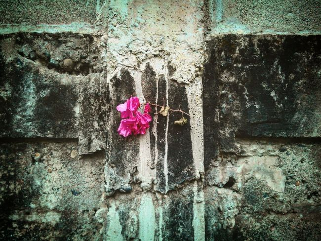 Nature Day Outdoors No People Beauty In Nature Flower Wall Philippines Life Death Hang