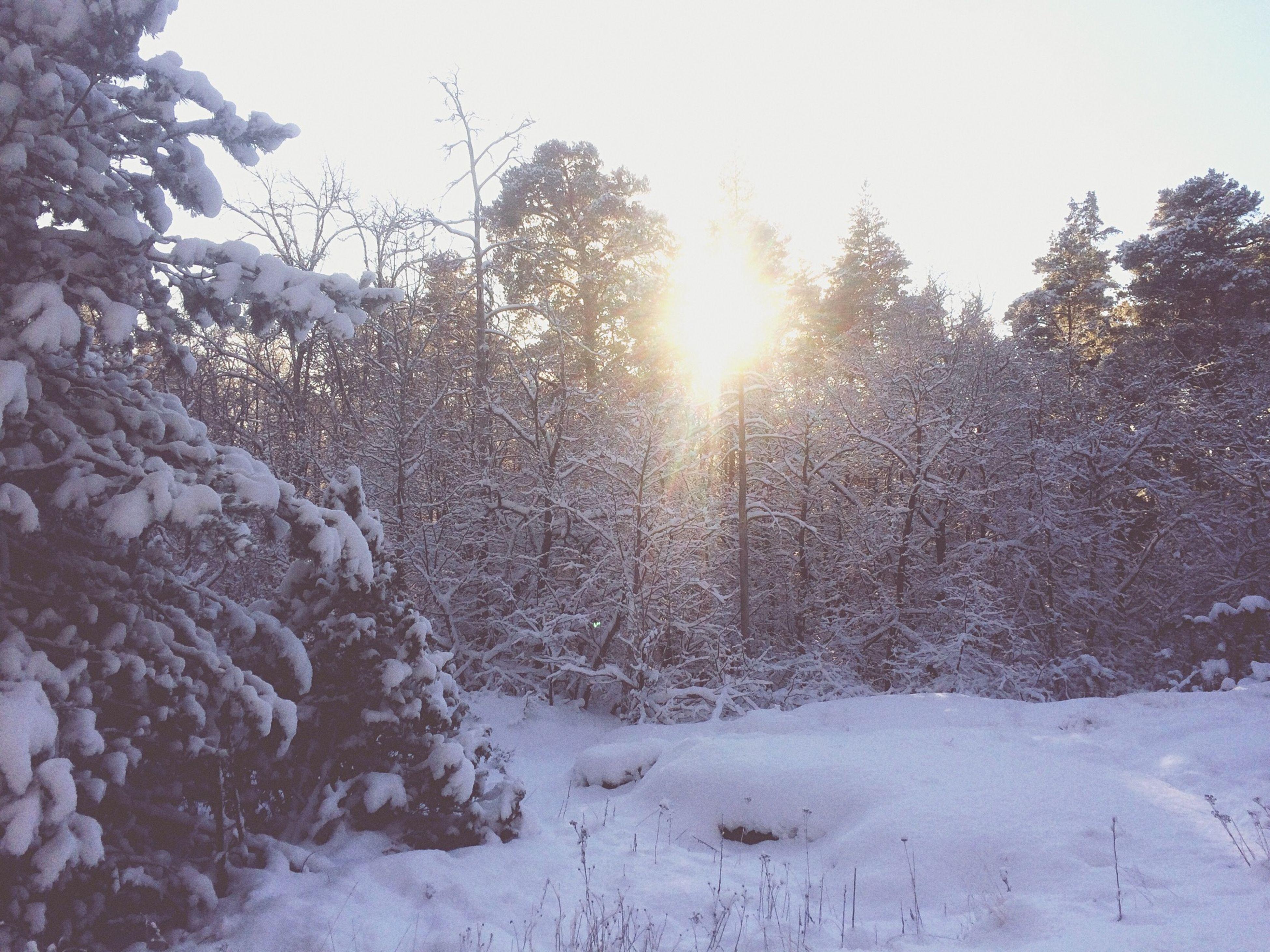 snow, winter, cold temperature, season, tree, tranquility, tranquil scene, beauty in nature, weather, scenics, nature, clear sky, sun, covering, frozen, sunlight, landscape, sunbeam, non-urban scene, lens flare