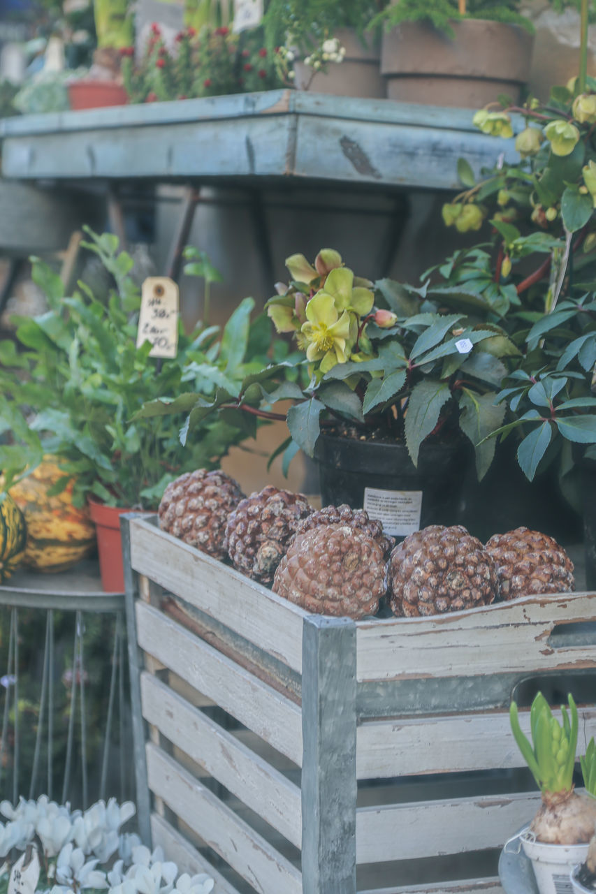 freshness, food, food and drink, no people, growth, day, plant, variation, flower, healthy eating, indoors, nature, close-up