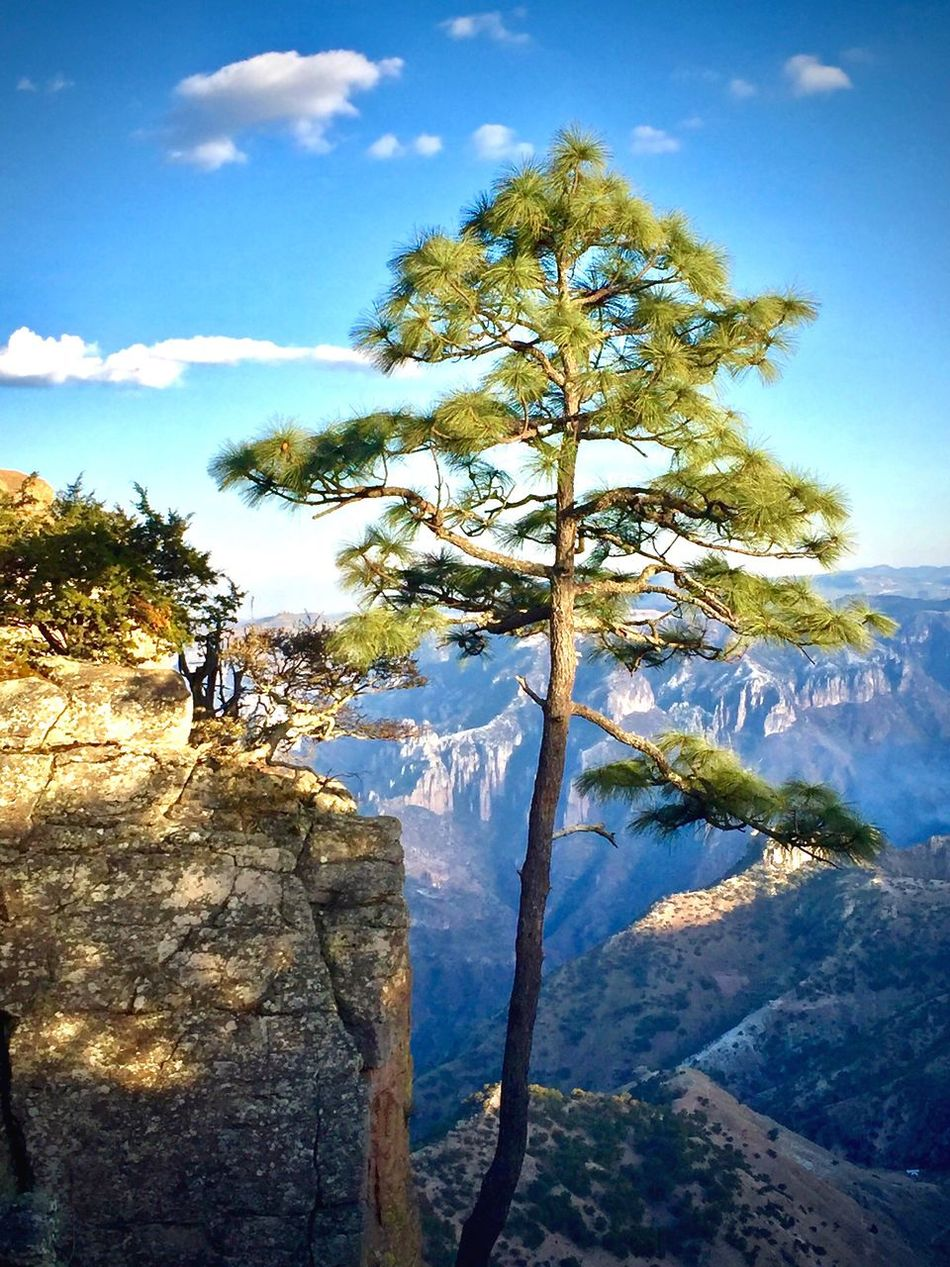 Sky Nature Beauty In Nature Scenics Tranquility Water Tree Outdoors Tranquil Scene Day Cloud - Sky No People Growth Coppercanyon Pine Tree