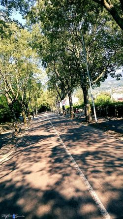 Showcase July On The Way Landscape_photography Tree-lined Street Z3 Xperia Arezzox