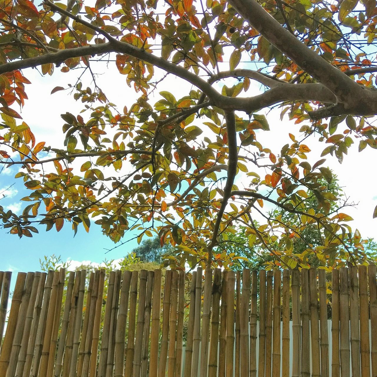 Tree Tree Nature Growth Outdoors Beauty In Nature Sky Branch Day Honduras No People Low Angle View