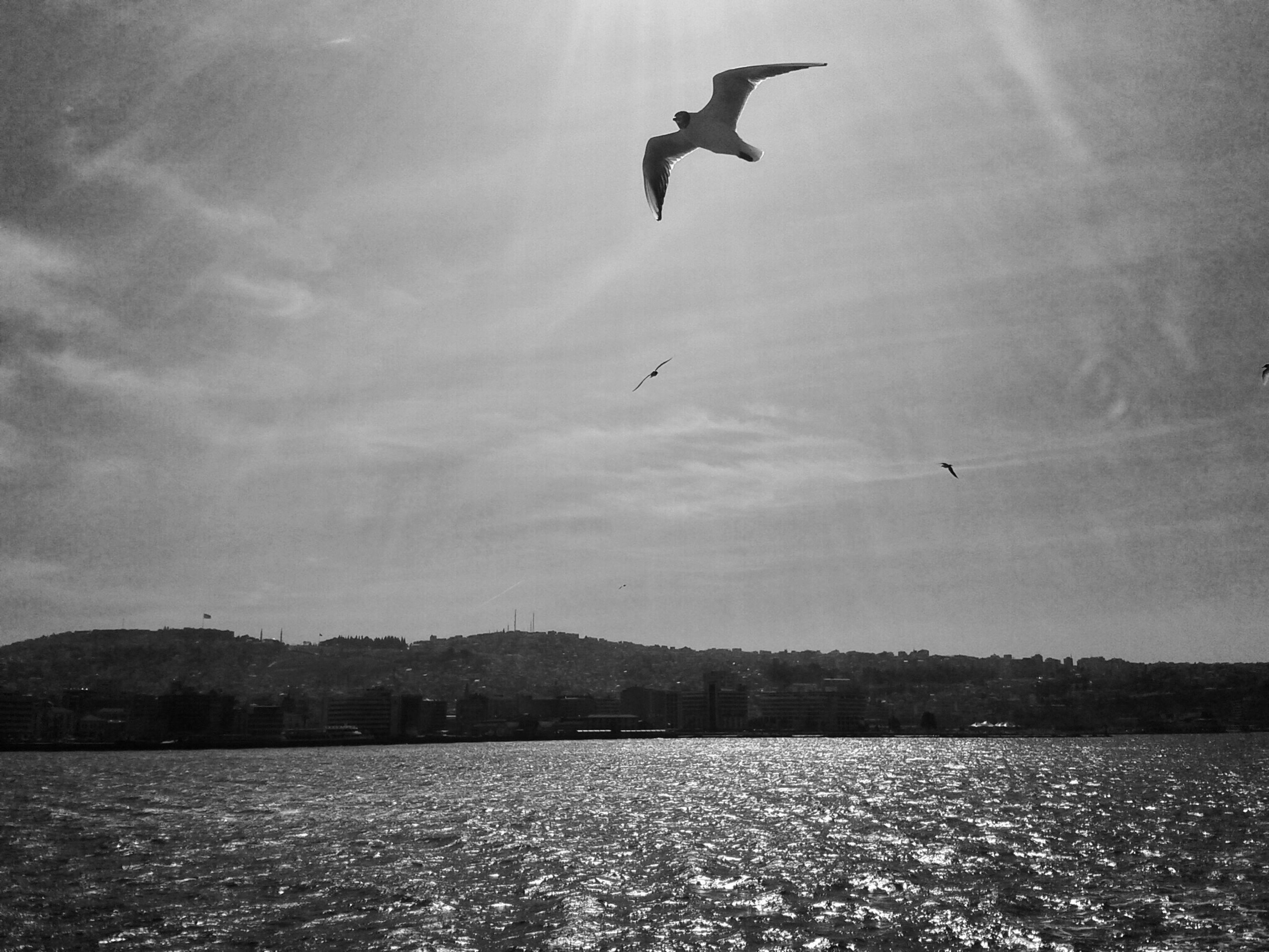 bird, flying, animal themes, animals in the wild, wildlife, water, spread wings, sky, mid-air, waterfront, sea, one animal, seagull, silhouette, nature, scenics, beauty in nature, tranquil scene, tranquility, cloud - sky