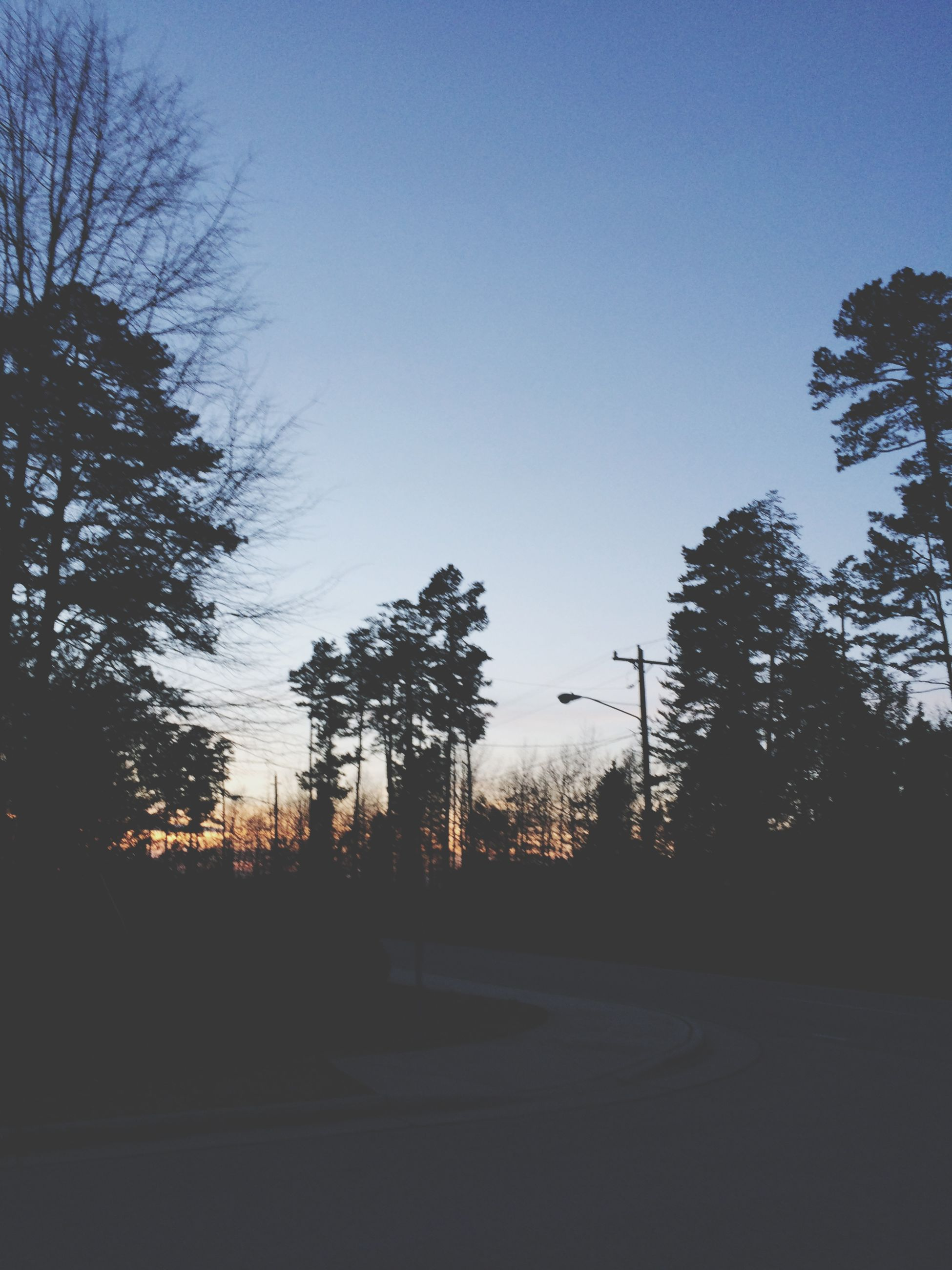 tree, silhouette, clear sky, blue, sky, tranquility, sunset, tranquil scene, copy space, dusk, scenics, nature, beauty in nature, bare tree, road, outdoors, no people, growth, dark, landscape