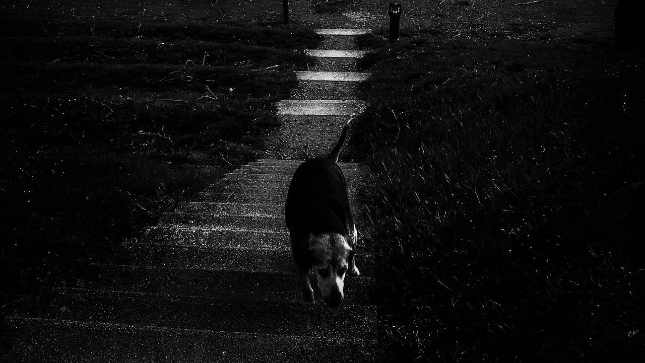 Quietude My Beautiful Self Or Miscellaneous? Ant Hill Looking For Water Où Courent Ces Chiens Bleus?!!!!! Dès Le Départ Faut Que Tu Comprennes Silhouette Listen Sounds