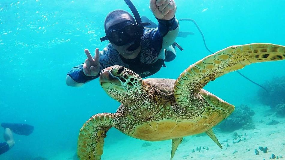 Underwater UnderSea Sea Scuba Diving Animal Wildlife Sea Life Water Reptile Swimming Nature Blue Animals In The Wild Snorkeling One Person Adult Sea Turtle People Animal Themes Adults Only Day