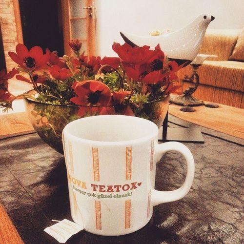 Gece detoksu Novateatox @novateatox Detoks Tea Sağlık Odemlergitsin Iyiuyku Kesintisiz Fit Faydalı Tavsiyeederim Blogger Kelebekgunlugum Blog Herşeyçokgüzelolacak