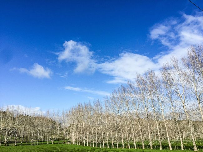 Blue Tree Tranquil Scene Bare Tree Grass Tranquility Countryside Beauty In Nature Nature Cloud