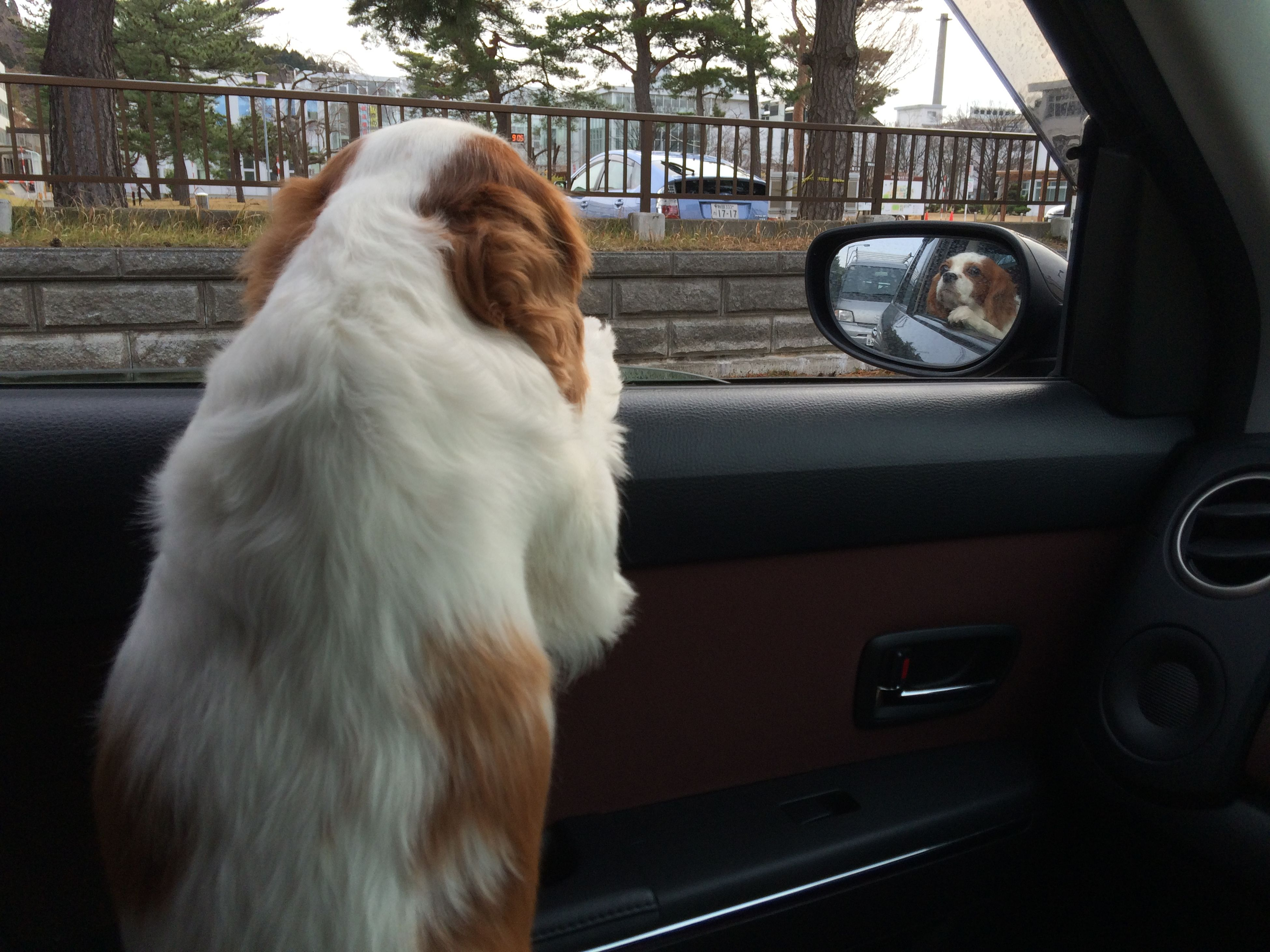transportation, one animal, car, land vehicle, domestic animals, animal themes, mode of transport, mammal, pets, dog, street, road, part of, close-up, car interior, window, side view, on the move, animal head, glass - material