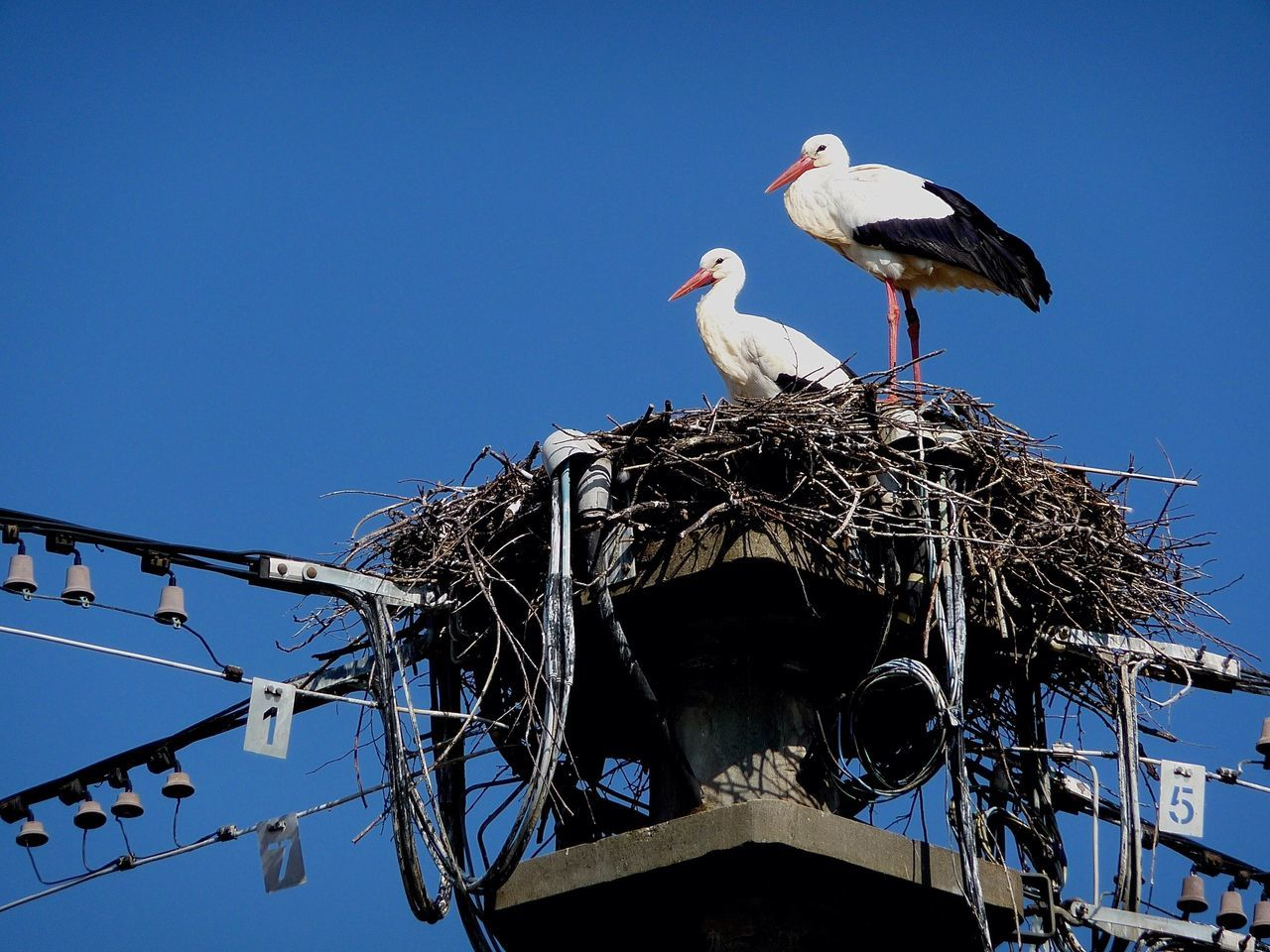 animal nest, bird, animals in the wild, stork, clear sky, low angle view, bird nest, white stork, animal themes, two animals, day, no people, outdoors, nature, animal wildlife, blue, togetherness, perching, sky