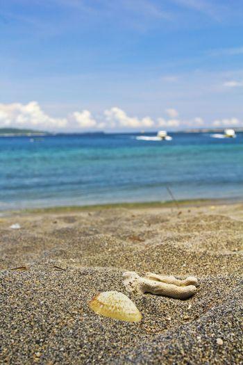 Beach Beachphotography Seashells Nature Nature_collection Sea And Sky Beachtime Canon Canonphotography Blue Sky Kerang Pasir Pantai Sand Beach Sand Sands Showcase March